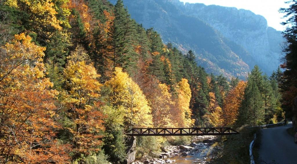 Sanidad Forestal: Cañón de Añisclo